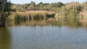 האגם בניצנים