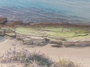שמורת חוף השרון ליד שפיים