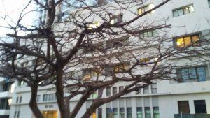 בית השגרירות האמריקאית לשעבר ברוטשילד תל אביב