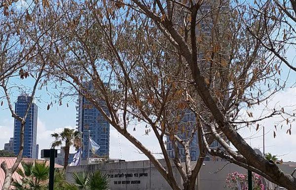 סיור בבתי הקפה ההיסטוריים של תל אביב